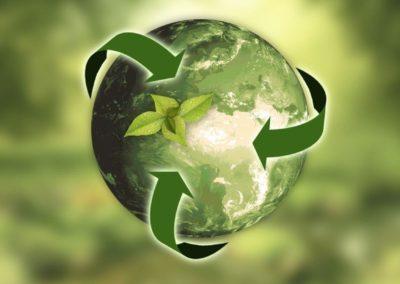 Wellness & Sustainability